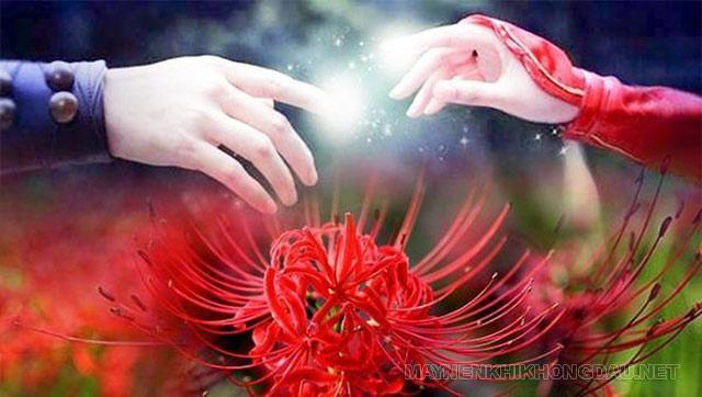 Hoa bỉ ngạn tượng trưng cho điều gì?